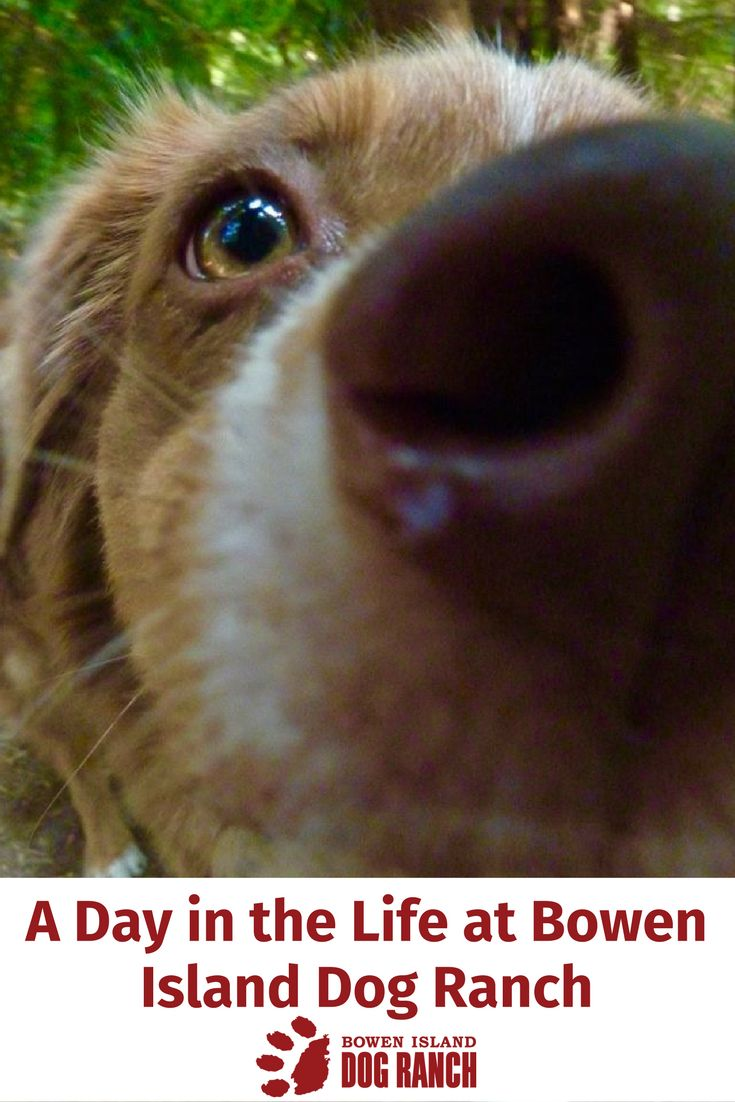 We all want to know how our dogs will be treated when we board them when it comes time for a dog free vacation. This video shows exactly what its like for a dog staying at the #BowenIslandDogRanch on beautiful Bowen Island!