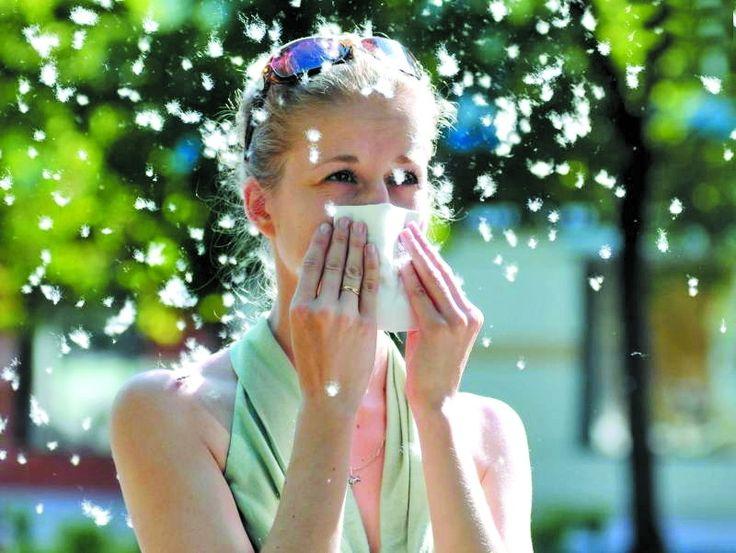 Не рубай тополю — прибери в оселі. Як боротися з алергією на пух? #WZ #Львів #Lviv #Новини #Життя  #оселя