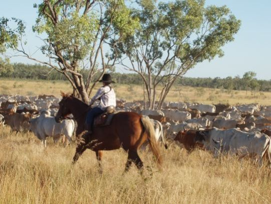 Get trained up to work on farms in the Australian Outback with a guaranteed job on successful completion of the training period.