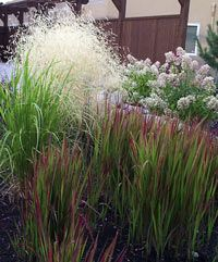 Landscape uses for ornamental grasses. {Bluestem Nursery}  Including drought & shade tolerant, seasonal colour & foleage. Very helpful site with long lists.