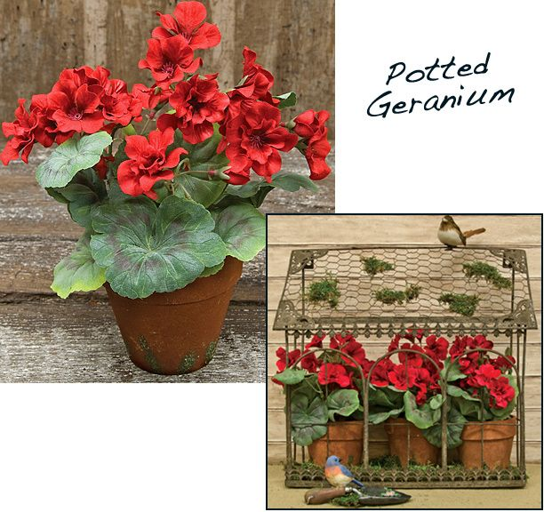 KP Creek Gifts - Potted Geraniums