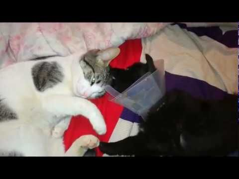 The rescued dog is playing with the cat - DISI & SARA