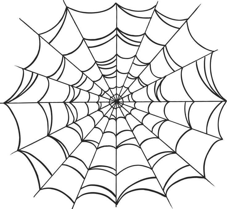 Spider in web drawing - photo#8