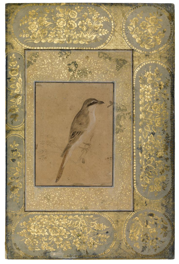 An Illuminated Album Page: A Drawing of a Shrike, Persia or India, 18th Century | Lot | Sotheby's