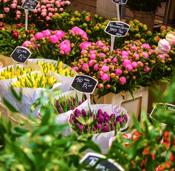 Amsterdam Flower Market, Tulips