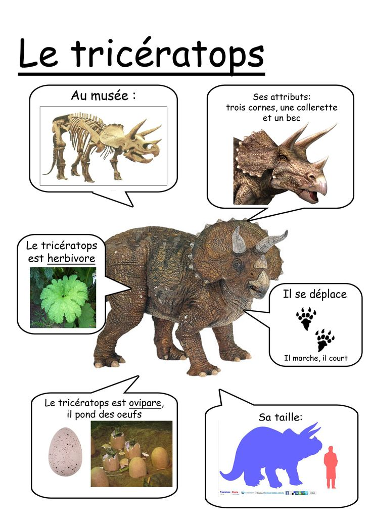 Fiche tricératops                                                       …