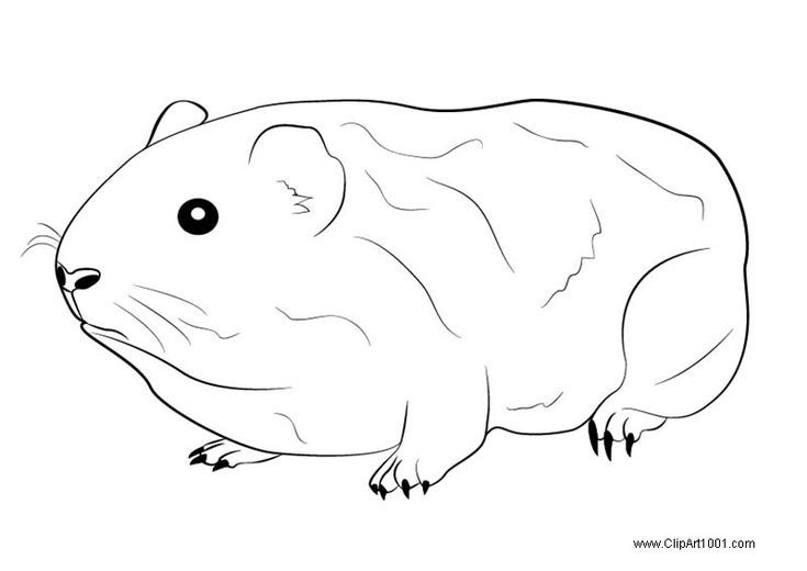 Guinea Pig Coloring Pages Free Printable