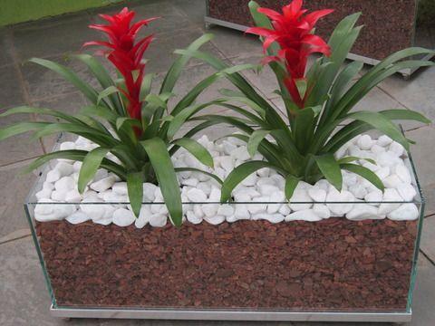 Bromélia: Trata-se de uma planta que não precisa de muitos cuidados e é bastante resistente. Na hora de escolher a planta, leve em consideração o tamanho do vaso, que precisa ser proporcional ao da espécie de bromélia.