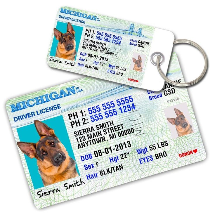 Michigan Driver License Custom Dog Tags for Pets (2) and Wallet Card - Personalized Pet ID Tags - Dog Tags For Dogs - Dog ID Tag - Personalized Dog ID Tags - Cat ID Tags - Pet ID Tags For Cats *** To view further for this item, visit the image link. (This is an affiliate link and I receive a commission for the sales)