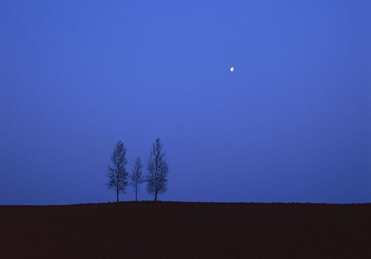 BLUE - Furano-Biei Color | Garden Holiday