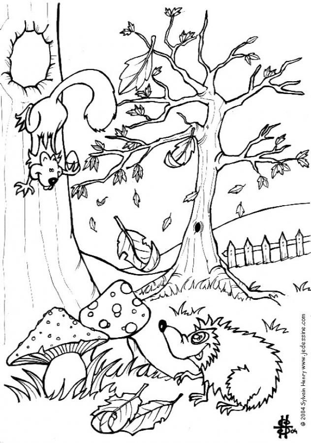 Squirrel And Hedgehog Coloring Page More Forest Animals Sheets On Hellokids