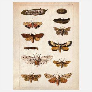 Science Moth Print