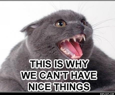 Funny Cat caradel