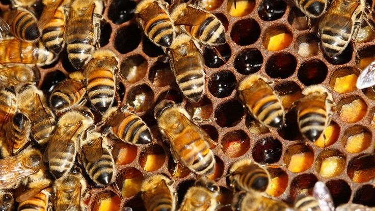 Organized crime syndicates in New Zealand are stealing and trading lucrative beehives, according to reports.