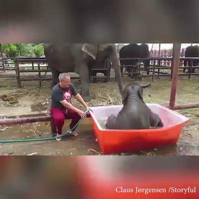 Want To Enjoy Bath…….. Your Dear Elephant…….