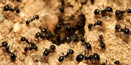 Ants Ants #Ants everywhere - Call Jax Pest Control to get rid of them - (904) 289-2800 #Jacksonville https://t.co/IZ0Yjq2qLy