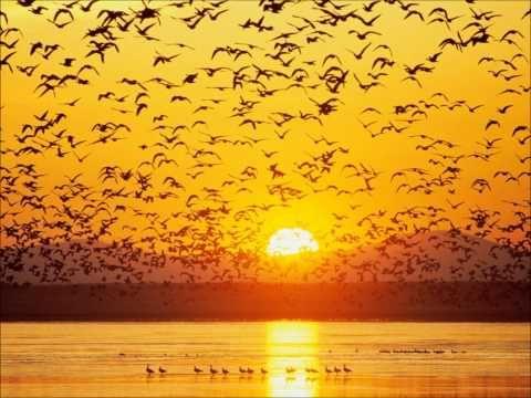 Modal Scarf - A Denison Sunset by VIDA VIDA louJ0M