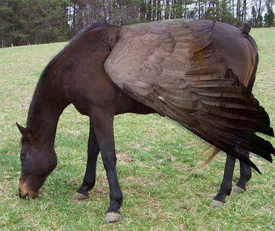 """""""Horse-Bird"""""""