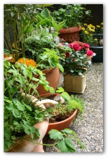 Container Garden Designs, Learn How to Container Garden, Container Garden Ideas