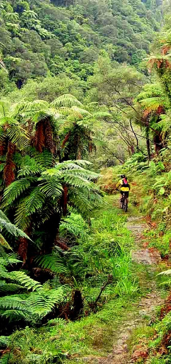 Byke Trail Background New Zealand