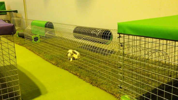 #ahutchisnotenough. Rescue buns from Fat Fluffs enjoy their time in the Runaround enclosure at the national pet show 2014
