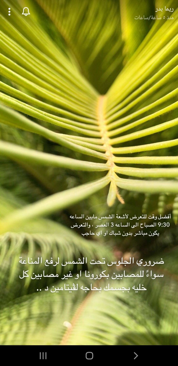 Pin By Shahd On معلومات مهمه Flowers Plants Dandelion