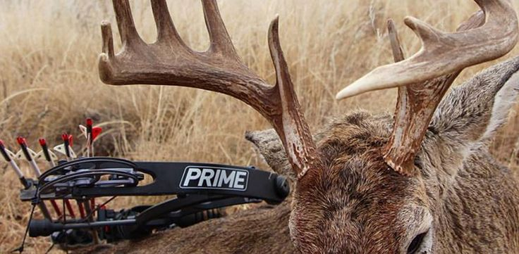 As you reflect on the 2016 deer season, you might naturally wonder what you could do now to make 2017 an even better bow hunting year. That's what New Year's is all about, right? Most people typically spend this time of year pondering what they did right or wrong, and how they want their new year to shape up. If you're going to participate, why not include hunting goals and improving your deer habitat in the mix too?