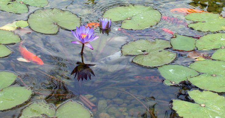 Como construir um lago no quintal. Você pode levar a beleza da natureza e da vida selvagem para o quintal de casa com a construção de seu próprio lago. Isso pode ser trabalhoso, mas lhe trará muitos anos de alegria. De acordo com o serviço de conservação dos recursos naturais do departamento de agricultura dos Estados Unidos (Department of Agriculture's Natural Resources ...