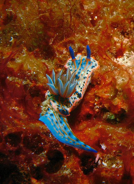 743 best strangely splendid sea slugs  exhortation to the nudibranch  images on pinterest