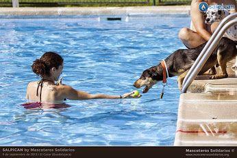 Pin de huellas friends en noticias de animales perros for Piscinas para perros grandes