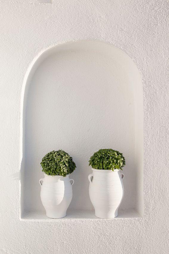 Βασιλικός, μου θυμίζει πάντοτε την Ελλάδα... #basil plants#Greece