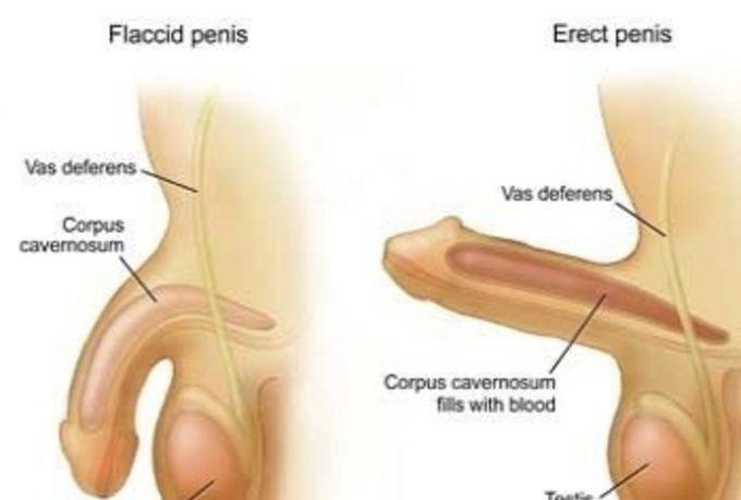 penis flacid problem