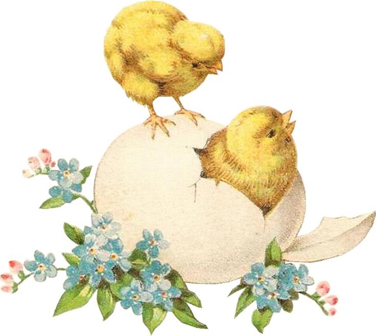 Открытка пасха цыпленок