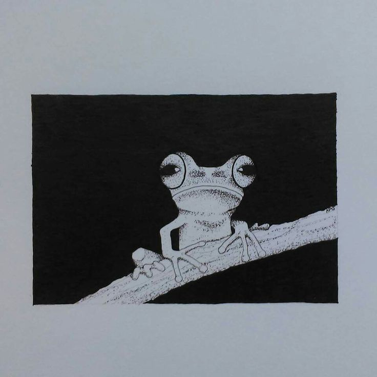Illustration of a tree frog by Ayla Paul