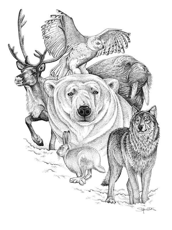 Pen and Ink by Stefanie Clark, via Behance