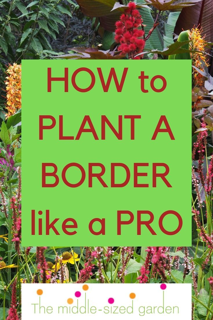 How To Plant A Border Like A Pro The Middle Sized Garden Garden Border Plants Low Maintenance Garden Design Gardening Tips