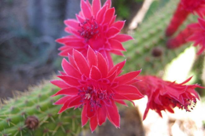 Succulents, Cactus and Cycads Plants and Seeds for Sale