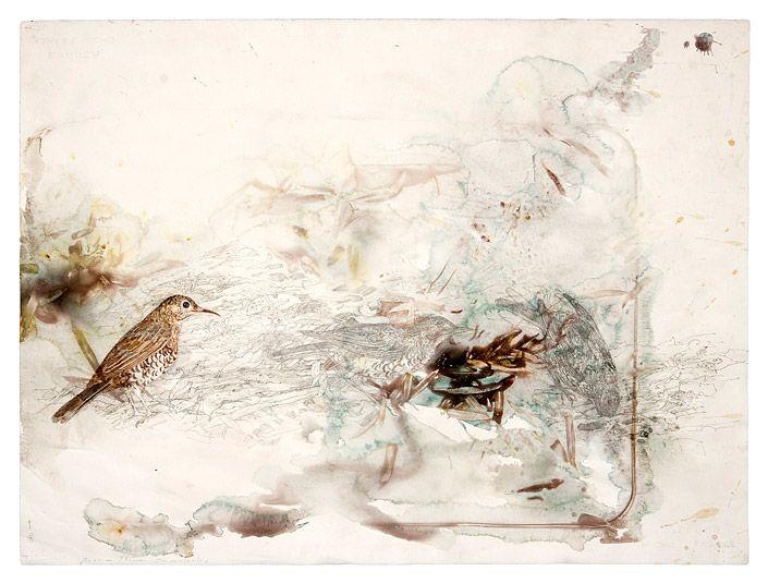 Leaflitter, bark and birdsong - Cobboboonee Forest | John Wolseley via roslyn oxley9 gallery