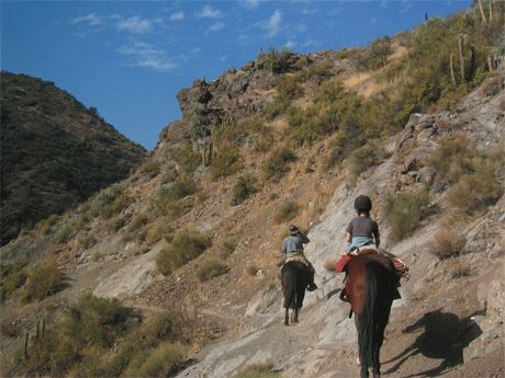 One Day Ride near Santiago - The most popular 1 day ride goes out from our parcela in El Toyo, just over an hour's drive from Santiago.    It winds up through native Chilean trees and follows along the top edge of a river valley, passing cactus and chagual flowers perched on craggy rocks, with pools and waterfalls below. http://horseridingchile.com/blog/rides/one-day-ride