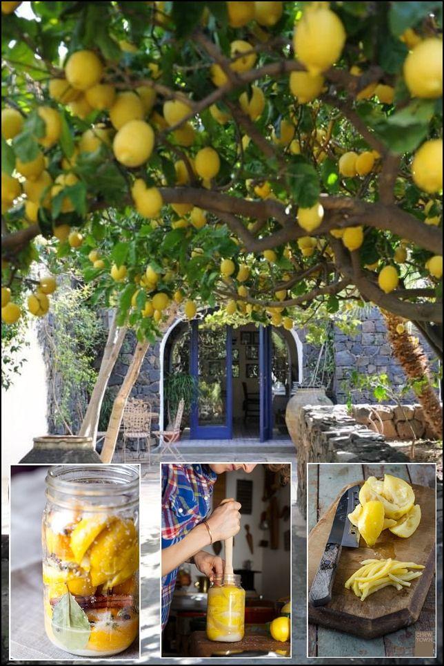 La conserva marroquí de limón se prepara con sal, laurel, cilantro, pimienta, canela y limones. Preserved lemons.