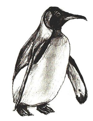 how to draw an emperor penguin step 5