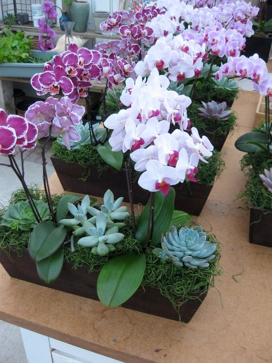 succulents and orchids for center pieces. 2 to 3 orchids per pot.