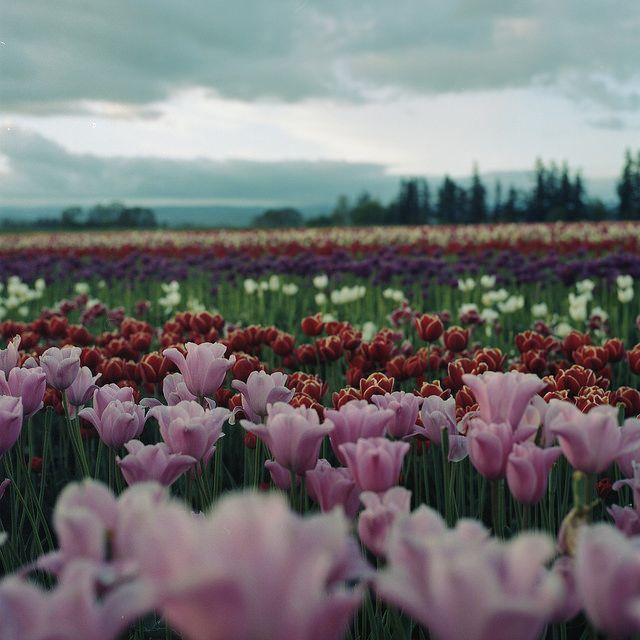 envoyer un bouquet de fleur pas cher 45 #fleurs #bouquet