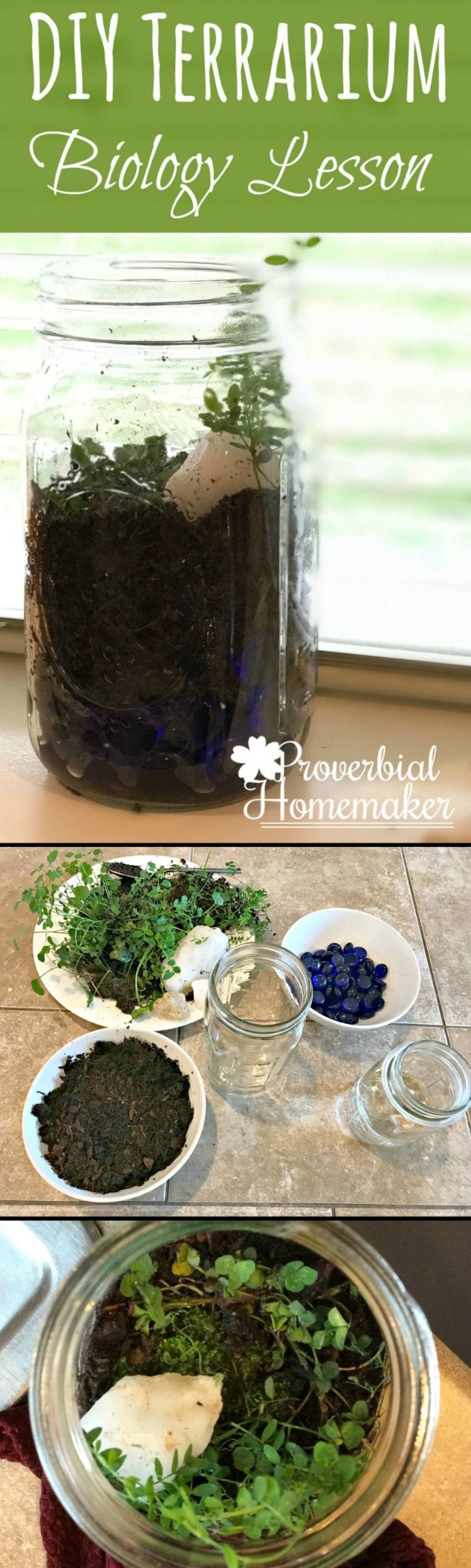 Make a DIY Terrarium with your kids! This is a simple, frugal, and hands-on science activity that's perfect for a homeschool plant unit or just for fun!