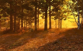 Autumn Forest 3D Screensaver and Animated Wallpaper v1.0