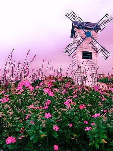 Pink mill