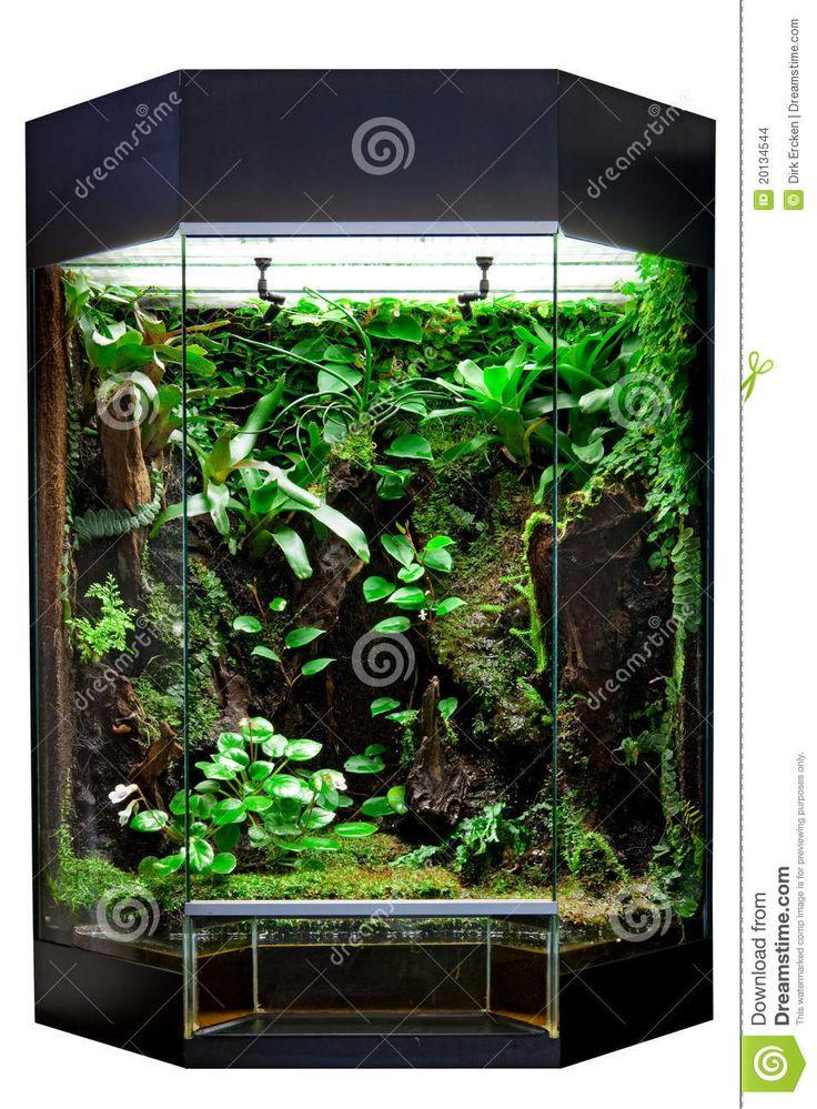Террариума или вивария для содержания тропических животных, фото подборка