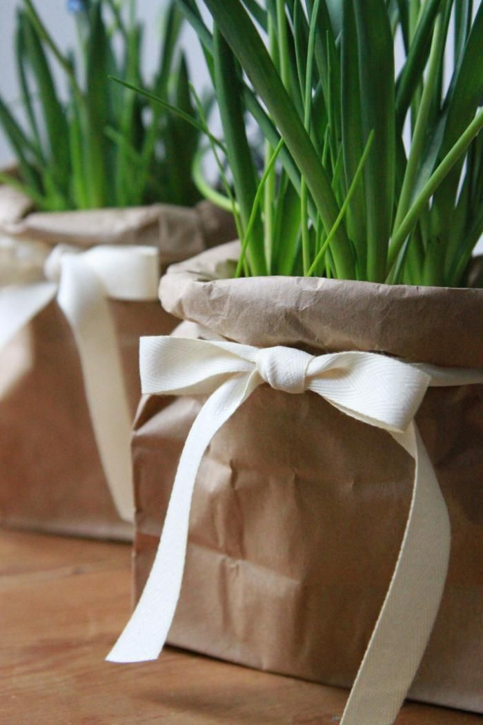 Th equivalent of a little black dress: a brown paper bag hides a plastic black pot ; Gardenista