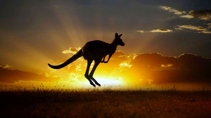 Hop to it and see if you can spot Australia's favourite animal in the wild with BIG4's guide to the top locations for kangaroo spotting.