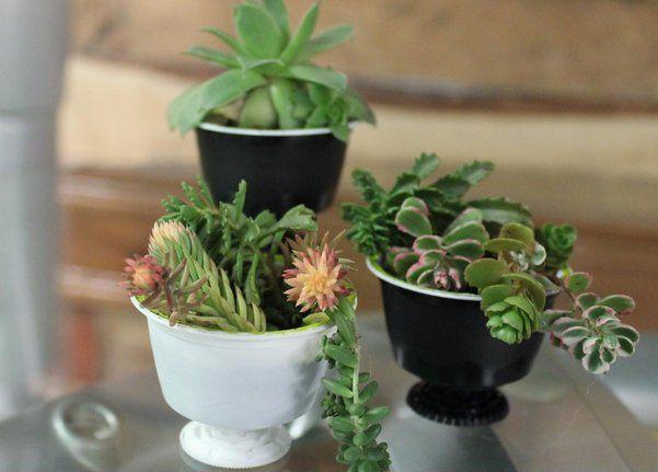 NESCAFÉ Dolce Gusto capsule planters